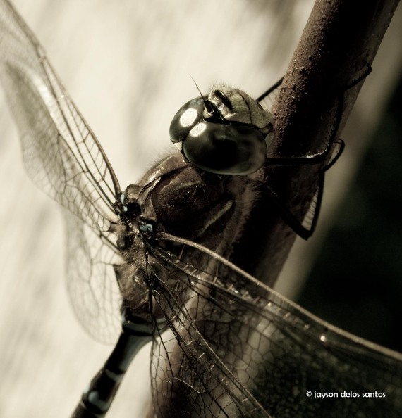 dragonfly02