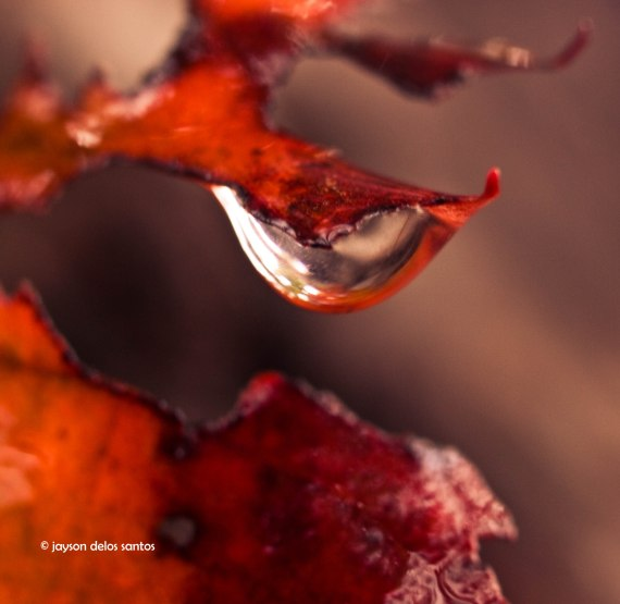 fall-3